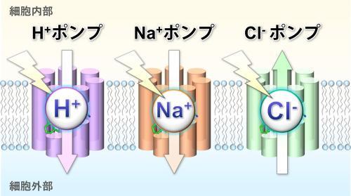 図1_kandori.jpg