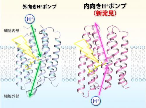 図2_kandori.jpg