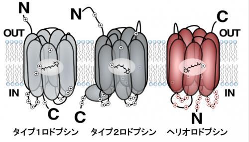図1_kandori2018.jpg