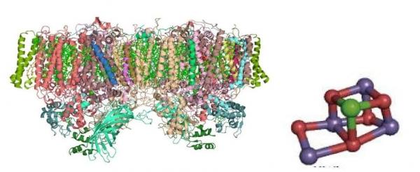 図7 光合成タンパク質PSIIの結晶構造(左)とMnクラスター(右)_1.jpg