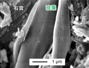珪藻を添加したペレットの断面SEM画像.jpg