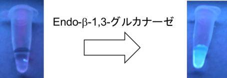 20190902大野綾音1.jpg